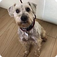 Adopt A Pet :: Warren - Redondo Beach, CA