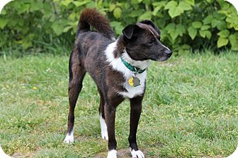 Terrier (Unknown Type, Small) Mix Dog for adoption in Lynnwood, Washington - BUDDY-ADOPTED!!