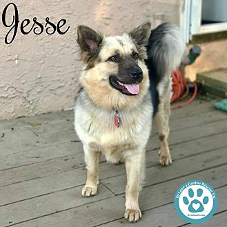 German Shepherd Dog Mix Dog for adoption in Kimberton, Pennsylvania - Jesse