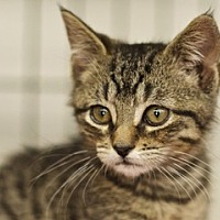 Adopt A Pet :: Tigger - Great Falls, MT