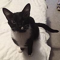 Adopt A Pet :: Tuppence - Apex, NC