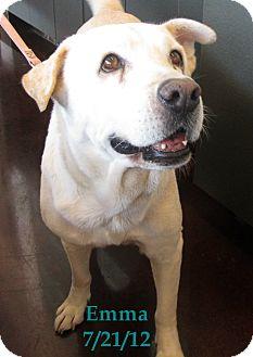 Labrador Retriever/Shar Pei Mix Dog for adoption in Chandler, Arizona - Emma