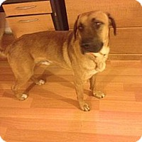 Adopt A Pet :: Dwayne - selden, NY