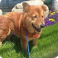 Adopt A Pet :: Harriet - Oceanside, CA