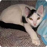 Adopt A Pet :: Noelle - Davis, CA