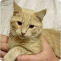 Adopt A Pet :: Waylon (F) - Chesapeake, VA