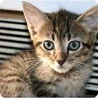 Adopt A Pet :: Mustafa - Canoga Park, CA