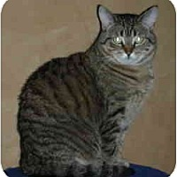 Adopt A Pet :: Moesha - Elmira, ON