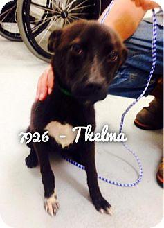 Labrador Retriever Mix Dog for adoption in Dillon, South Carolina - Thelma
