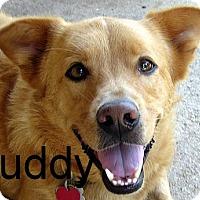 Adopt A Pet :: Buddy - Wimberley, TX