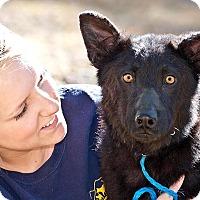 Adopt A Pet :: Rocky - Cashiers, NC
