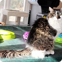 Adopt A Pet :: Samuel -Doglike/Dog Friendly - Arlington, VA