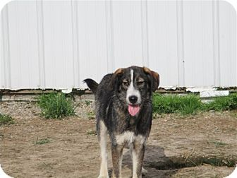 Terrier (Unknown Type, Medium)/German Shepherd Dog Mix Dog for adoption in Liberty Center, Ohio - Murphy