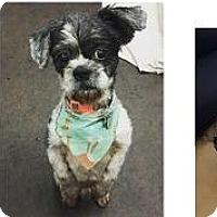 Adopt A Pet :: Kermit - Burbank, CA