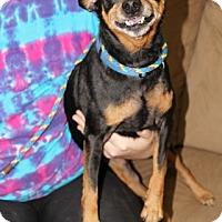 Adopt A Pet :: Renny - Syracuse, NY