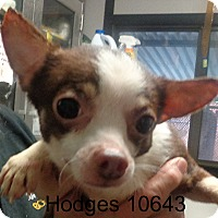 Adopt A Pet :: Hodges - Greencastle, NC