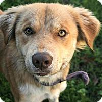 Adopt A Pet :: Cali - Lufkin, TX