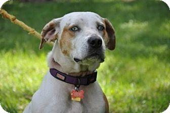 Catahoula Leopard Dog Mix Dog for adoption in Palm City, Florida - Bonnie