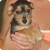 Adopt A Pet :: Neacie - Greenville, RI