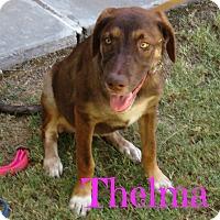 Adopt A Pet :: Thelma - Scottsdale, AZ