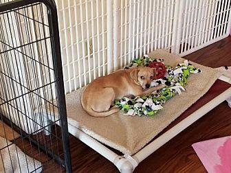 Terrier (Unknown Type, Medium) Mix Dog for adoption in Arlington, Washington - Gabriela  A terrier mix