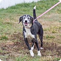 Adopt A Pet :: Skippie - Mooresville, IN