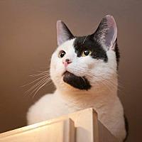 Adopt A Pet :: Oreo - Columbia, MD