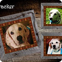 Adopt A Pet :: Tracker ADOPTED - Ontario, ON