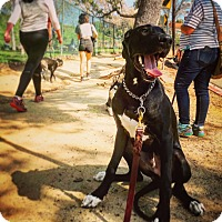 Adopt A Pet :: Duke - Sherman Oaks, CA