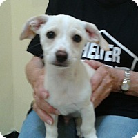 Adopt A Pet :: Keaton - Thousand Oaks, CA