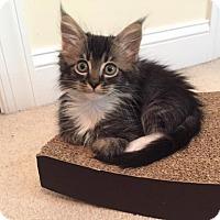 Adopt A Pet :: Dayton - Hampton, VA