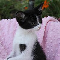 Adopt A Pet :: BETTY - Newport Beach, CA