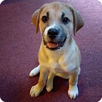 Adopt A Pet :: Buddy - Smithtown, NY