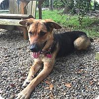Adopt A Pet :: Liberty - Summerville, SC