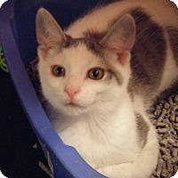 Adopt A Pet :: Turk - Kensington, MD