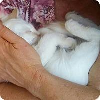 Adopt A Pet :: Fiona - Encinitas, CA