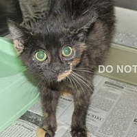 Adopt A Pet :: Fable - Rocky Mount, NC