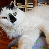 Adopt A Pet :: MOUSE - Ventura, CA