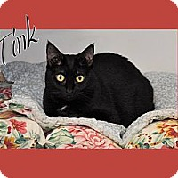 Domestic Shorthair Cat for adoption in Simpsonville, South Carolina - Tink