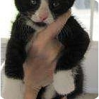 Adopt A Pet :: Sylvester - Warren, MI