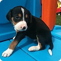 Adopt A Pet :: Willis - Linton, IN