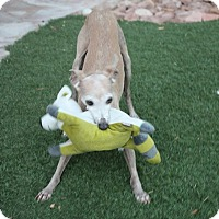Adopt A Pet :: Jake - LV - Costa Mesa, CA
