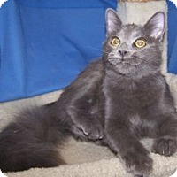 Adopt A Pet :: Zay - Colorado Springs, CO