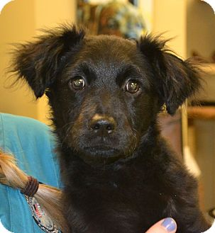 Collie Mix Dog for adoption in Beaumont, Texas - Cruz