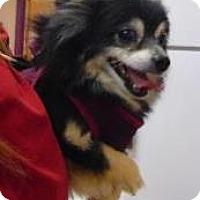 Adopt A Pet :: Gizmo - Adorable Man! - Quentin, PA