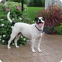 Adopt A Pet :: Thelma - Illinois - Wood Dale, IL