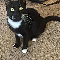Adopt A Pet :: Maggie - Royal Palm Beach, FL