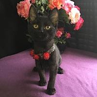 Adopt A Pet :: Eenie - Fayetteville, GA