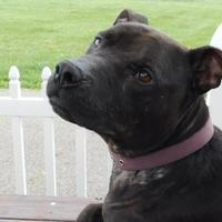 Adopt A Pet :: Wolverine - Louisville, OH