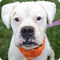 Adopt A Pet :: Jughead - Ann Arbor, MI